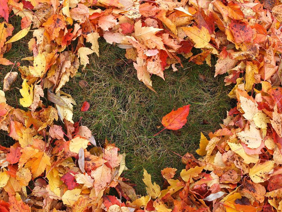 Free Photo Autumn Love Heart Fallen Leaves Free Image On