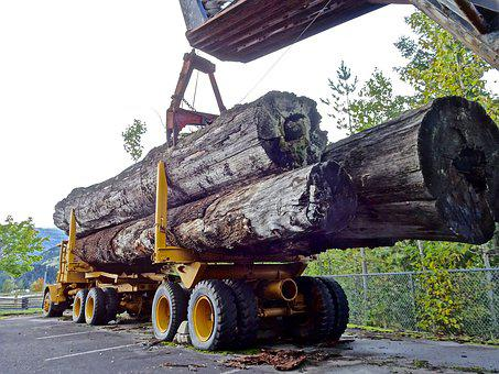 Lumber, Timber Truck, Logging, Forestry