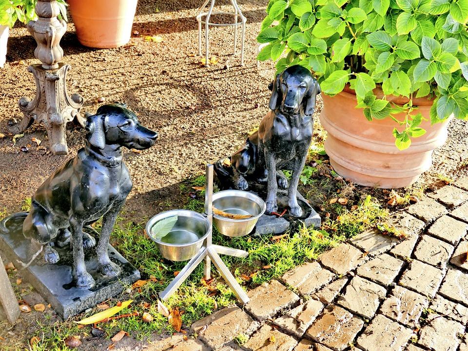 Hundetränke Napf Hundenapf · Kostenloses Foto auf Pixabay