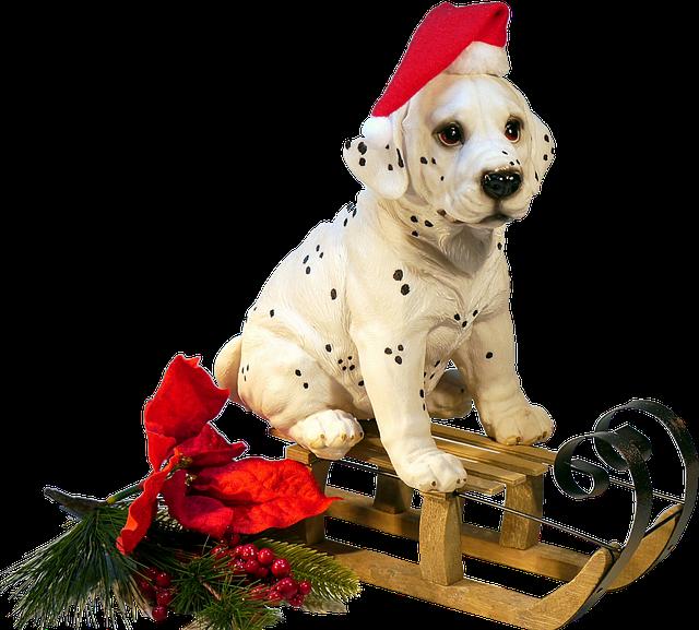 isolated dog on sledge christmas 183 free photo on pixabay