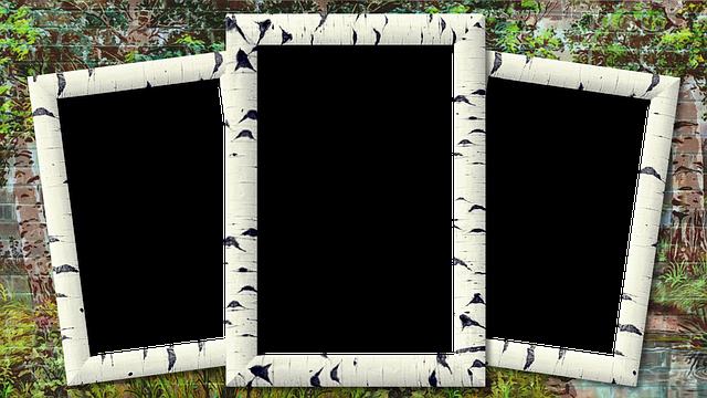 Frame Photo Birch Three · Free image on Pixabay
