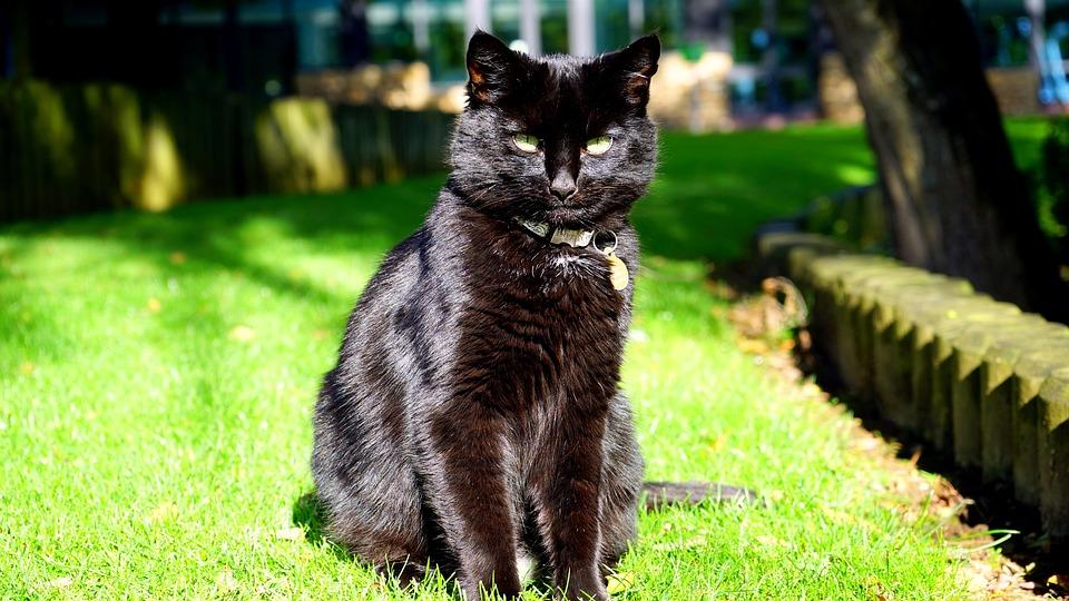 Kočička pro černou ženu