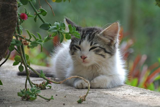 Kat Kitten Huisdier 183 Gratis Foto Op Pixabay