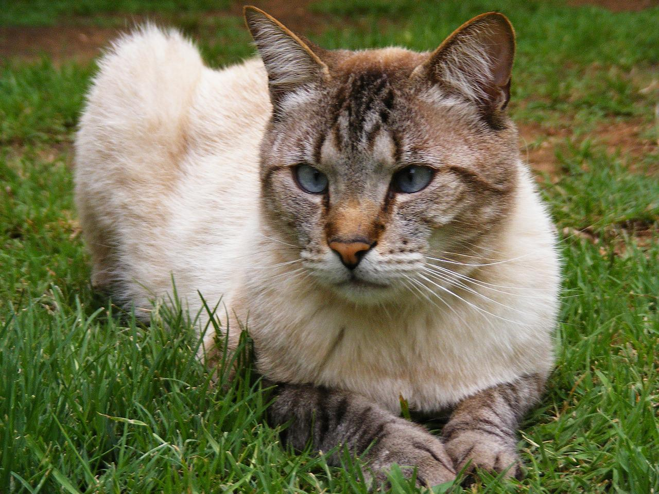 картинка домашнего животного кошка приложении был