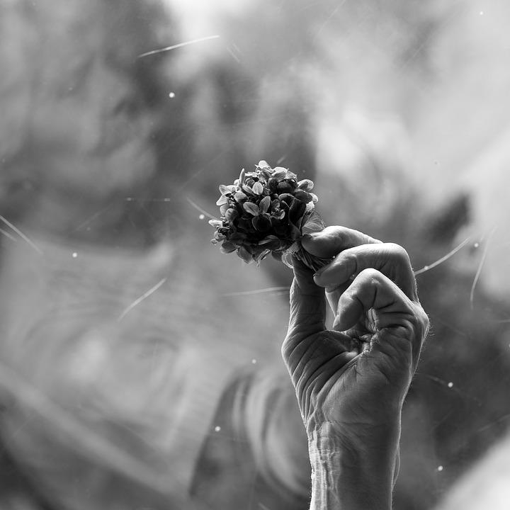 Mano de señora mayor agarrando un ramito de violetas. La foto está en blanco y negro, dando sensación de antigüedad