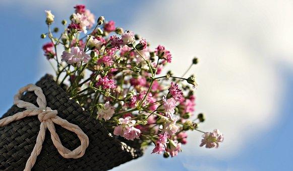 Flowers, Gypsophila, Small Flowers