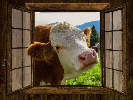 Window, Cow, Alm, Hut, Meadow, Pasture