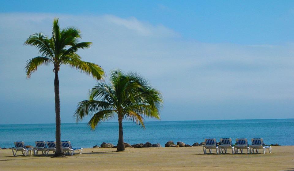 Beach Florida Sun Sand Palm Tree Chair Relax