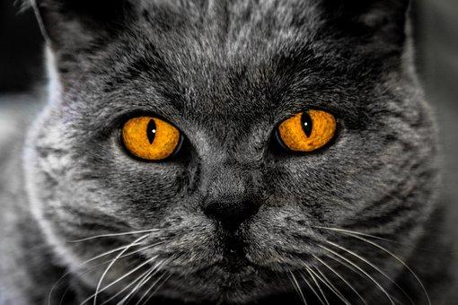 Hypnosis Like Cat Eyes