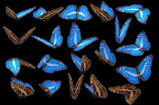 900 Free Unique Different Images Pixabay