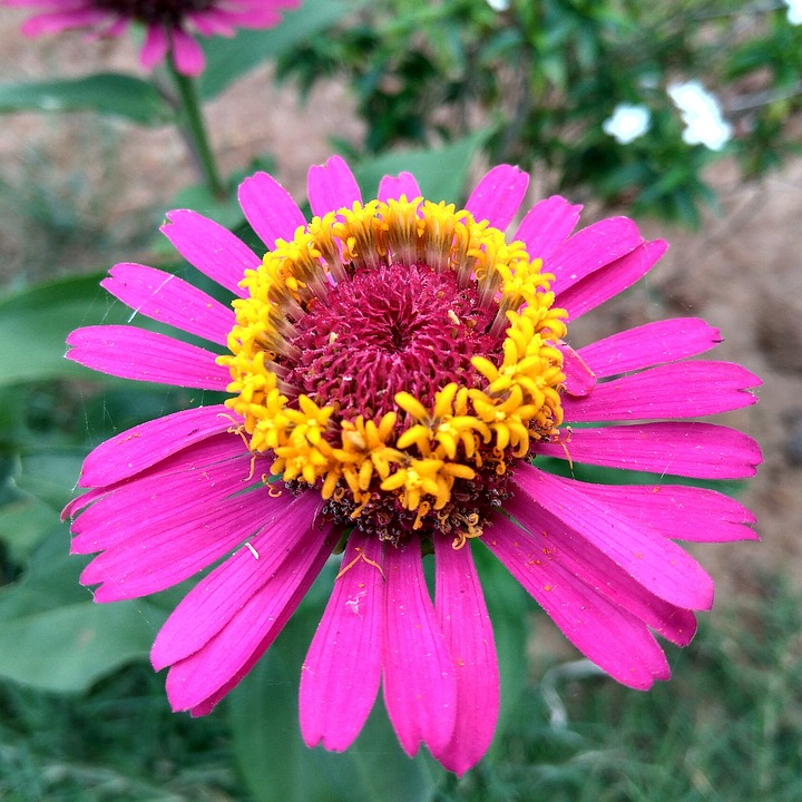 Flowers Garden Beautiful Free Photo On Pixabay