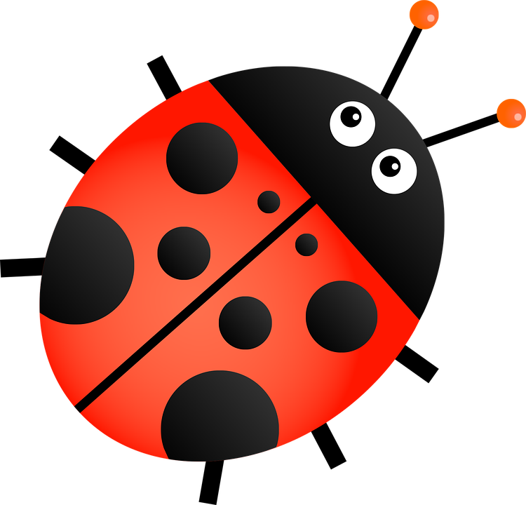 Ladybug Insect Animal Cartoon Bug Beetle Ladybird