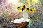 słoneczniki, wazon, upadek