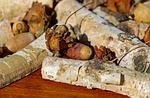 acorns, fruit