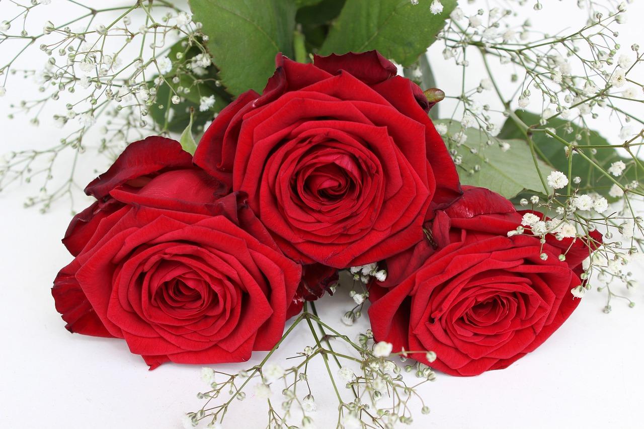 фото красивая цветы красные розы всех