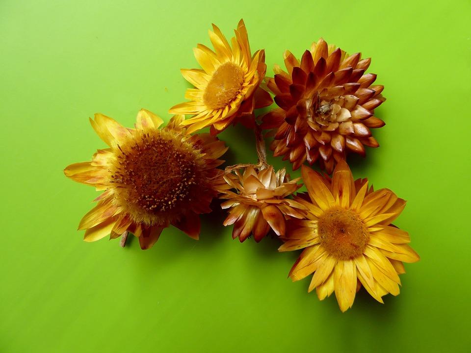 Fleurs Sechees Jaune Decoration Photo Gratuite Sur Pixabay