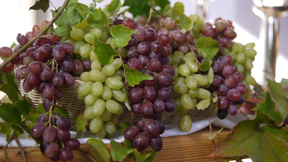 Nature, Autumn, Vines, Harvest, Grape, Ripe