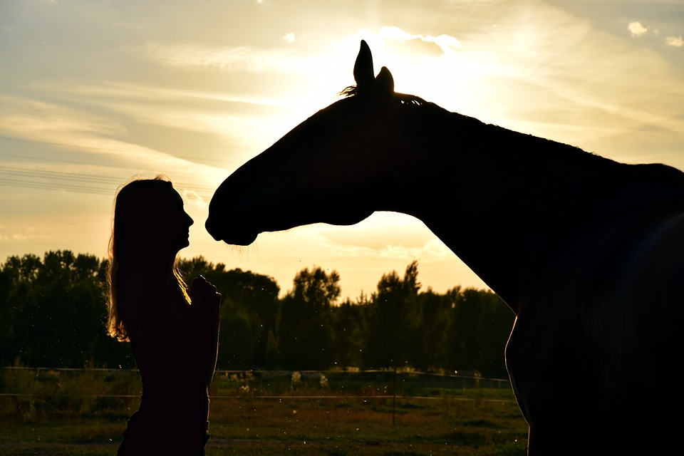 Sunset, Horse, Human, Relationship, Dreamy, Friends