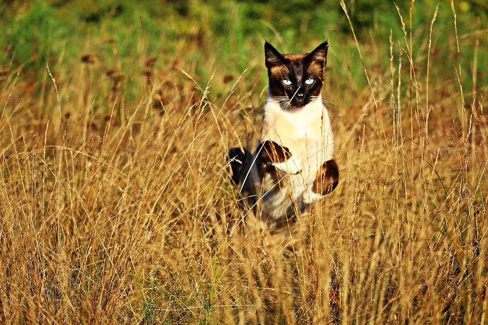 https://cdn.pixabay.com/photo/2016/10/07/22/44/cat-1722754_960_720.jpg