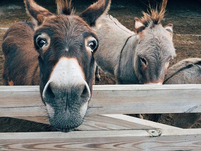 Donkey 640 Animales Granja