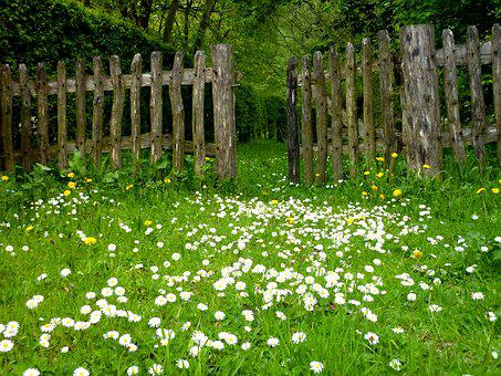 Jardin, Prairie, Clôture, Plantes