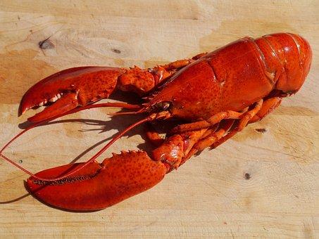 Lobster, Cook, Food, Seafood, Healthy