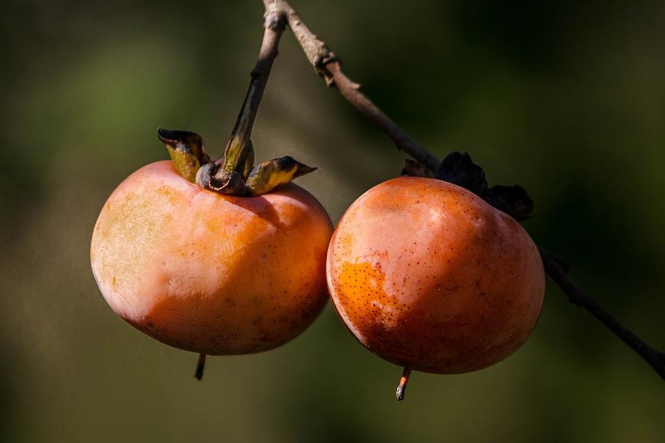 wild-persimmon-1727097_960_720.jpg