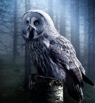 Owl, Bird, Beautiful, Night, Dark, Fog