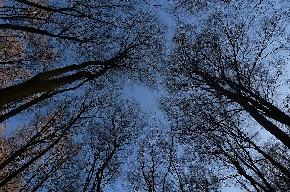 Brunches, Trees, Autumn, Winter, Sky
