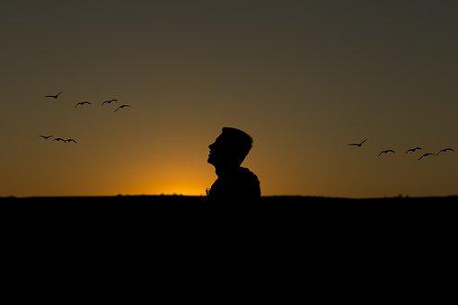 Dia, Pôr Do Sol, Aves, Silhueta, Macho