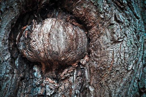 Baum, Rinde, Baumstamm, Natur, Wald