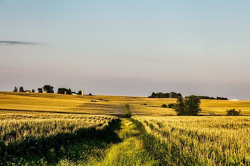 Iowa, Corn, Field, Farm, Rural, Rows