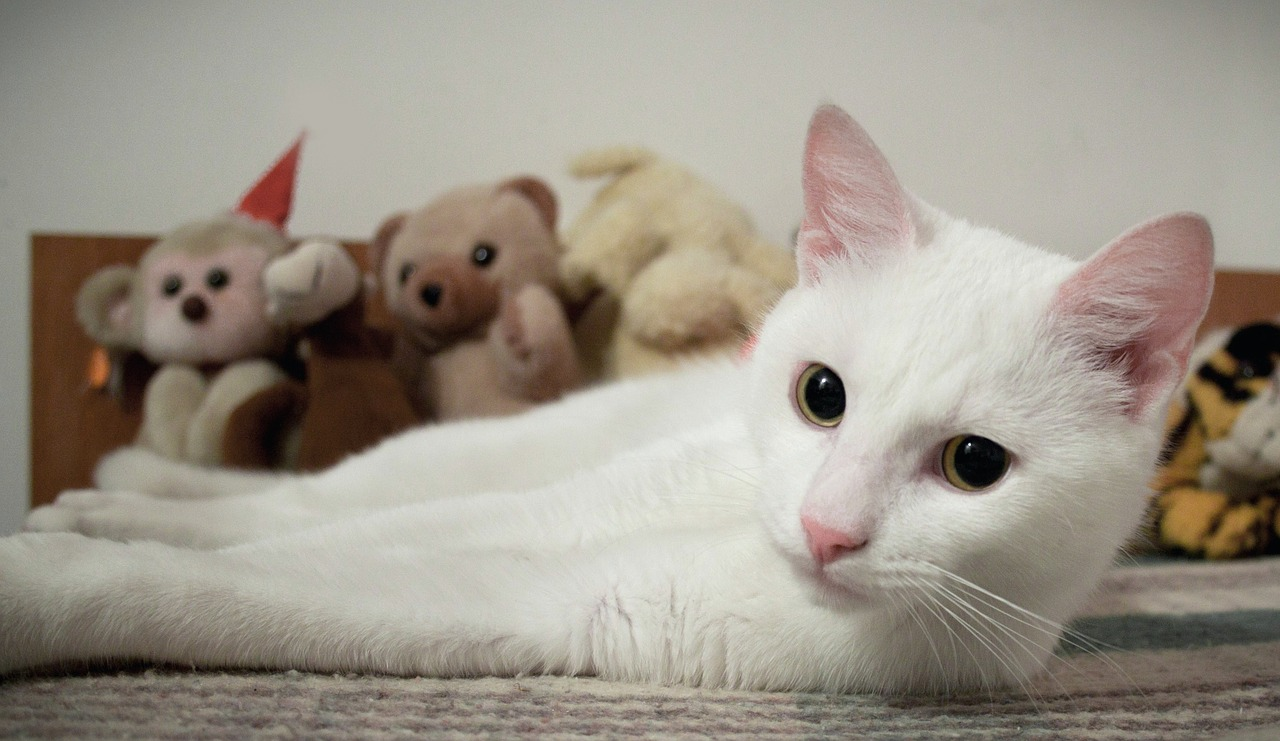 White cat goes nuts over stuffed animal  YouTube