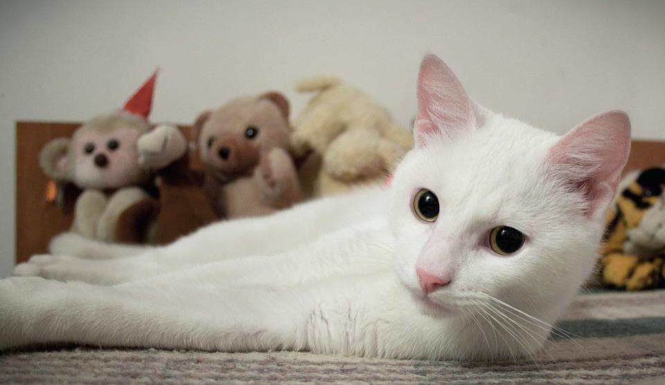 087b686d1ffd Γάτα Λευκό Ζώο - Δωρεάν φωτογραφία στο Pixabay