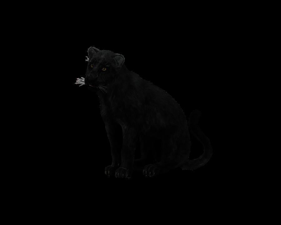 černá kočička velká
