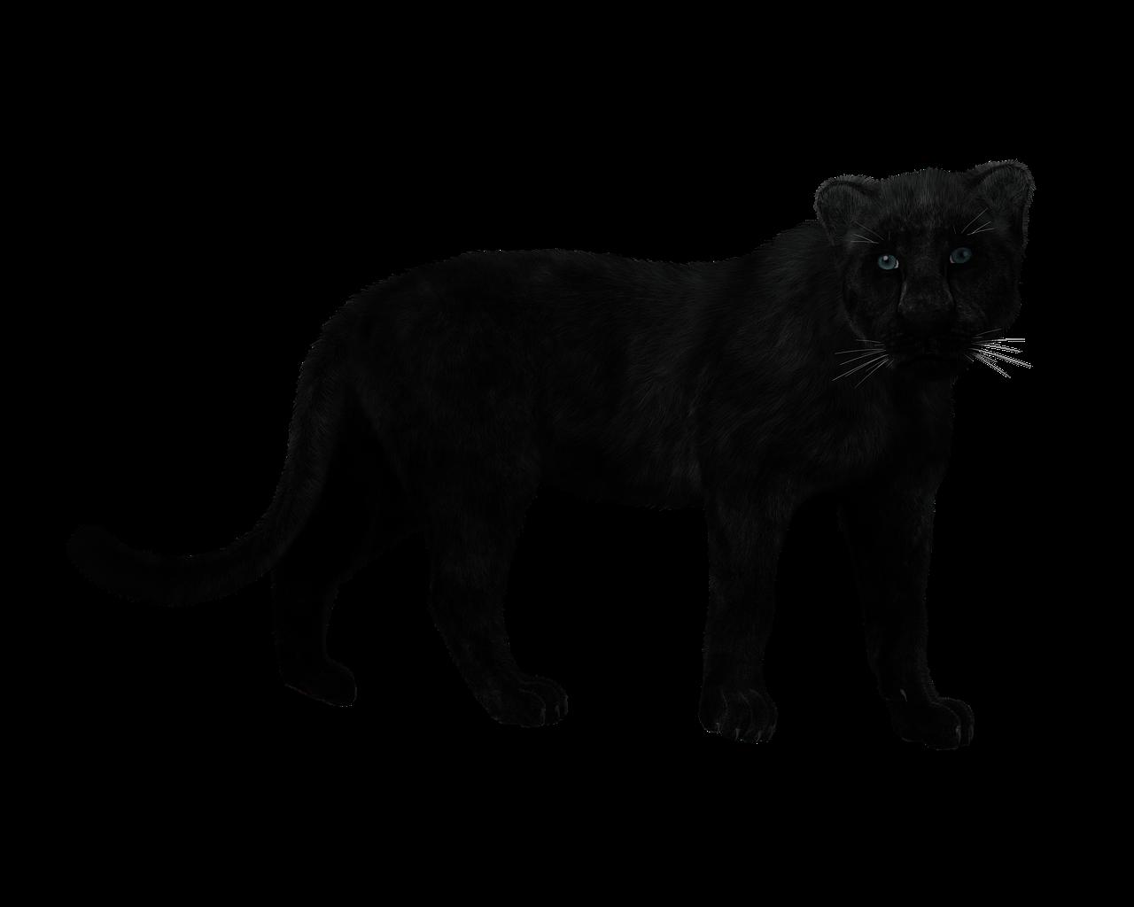 Panther Black Big Cat Mystical Free Image On Pixabay