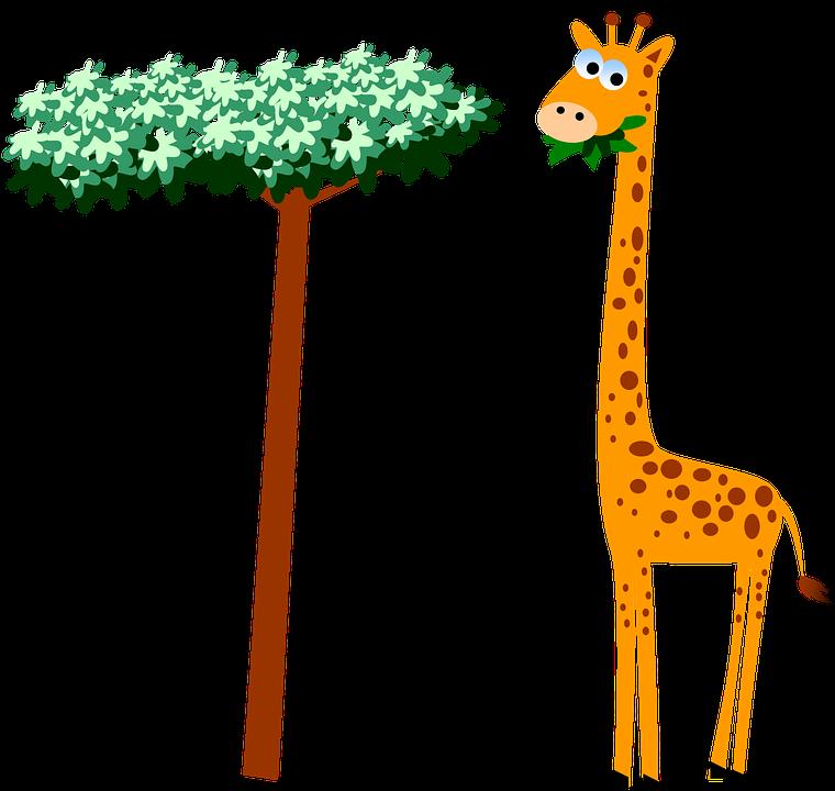Girafa Pescoco Desenhos Animados Imagens Gratis No Pixabay