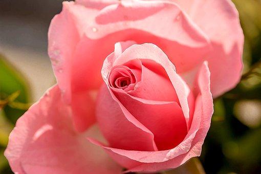 Romantik Bilder Pixabay Kostenlose Bilder Herunterladen