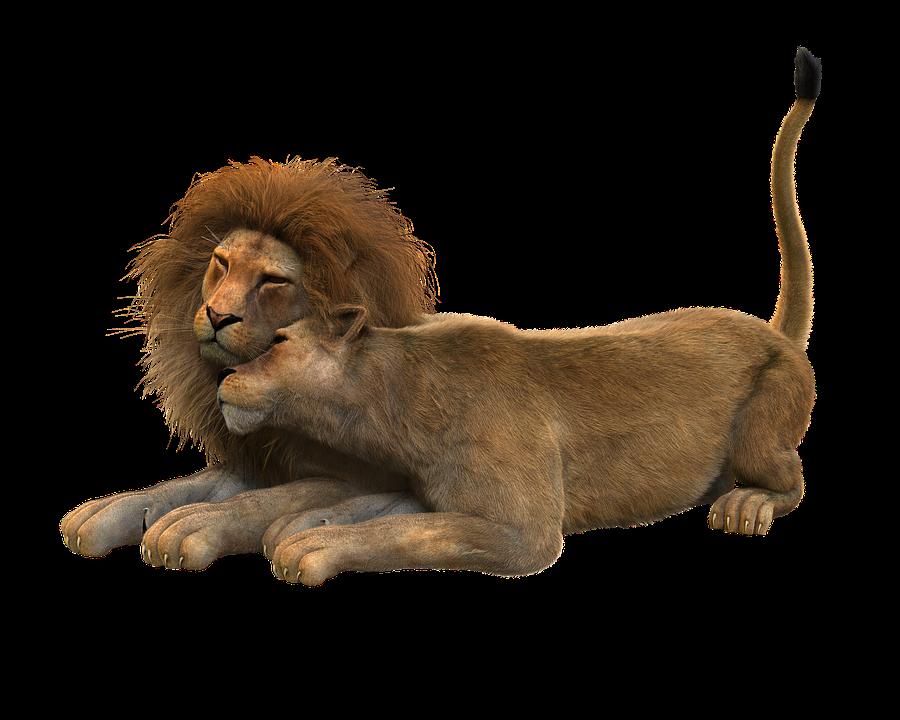 free illustration lion lions couple smooch cat free