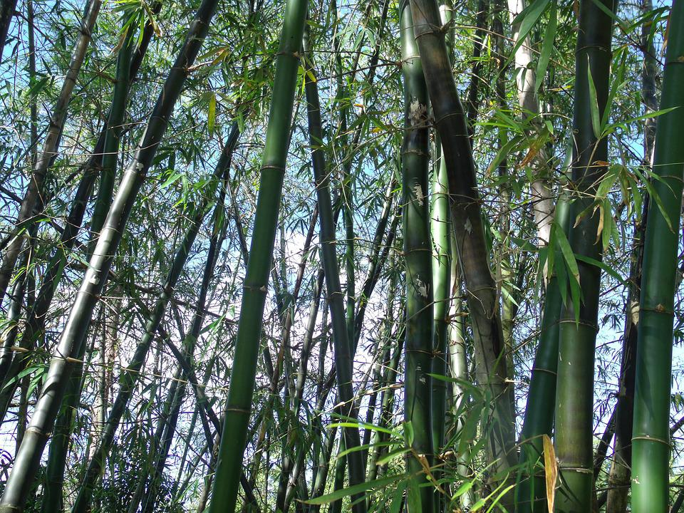 Bambus Planter Japansk Gratis Foto Pa Pixabay