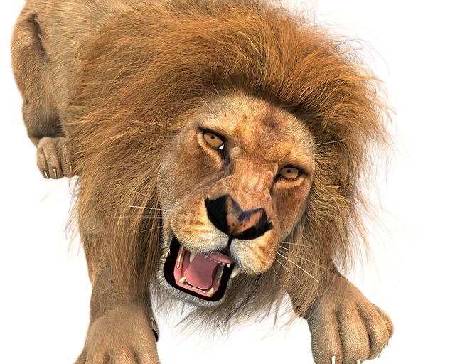 animal lion male king of the 183 free image on pixabay