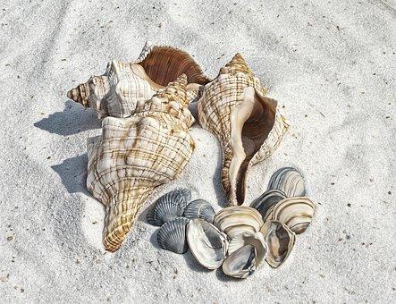 Illustration Shell Shells Beach Sand