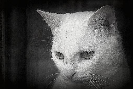 pekný zadok čierna mačička