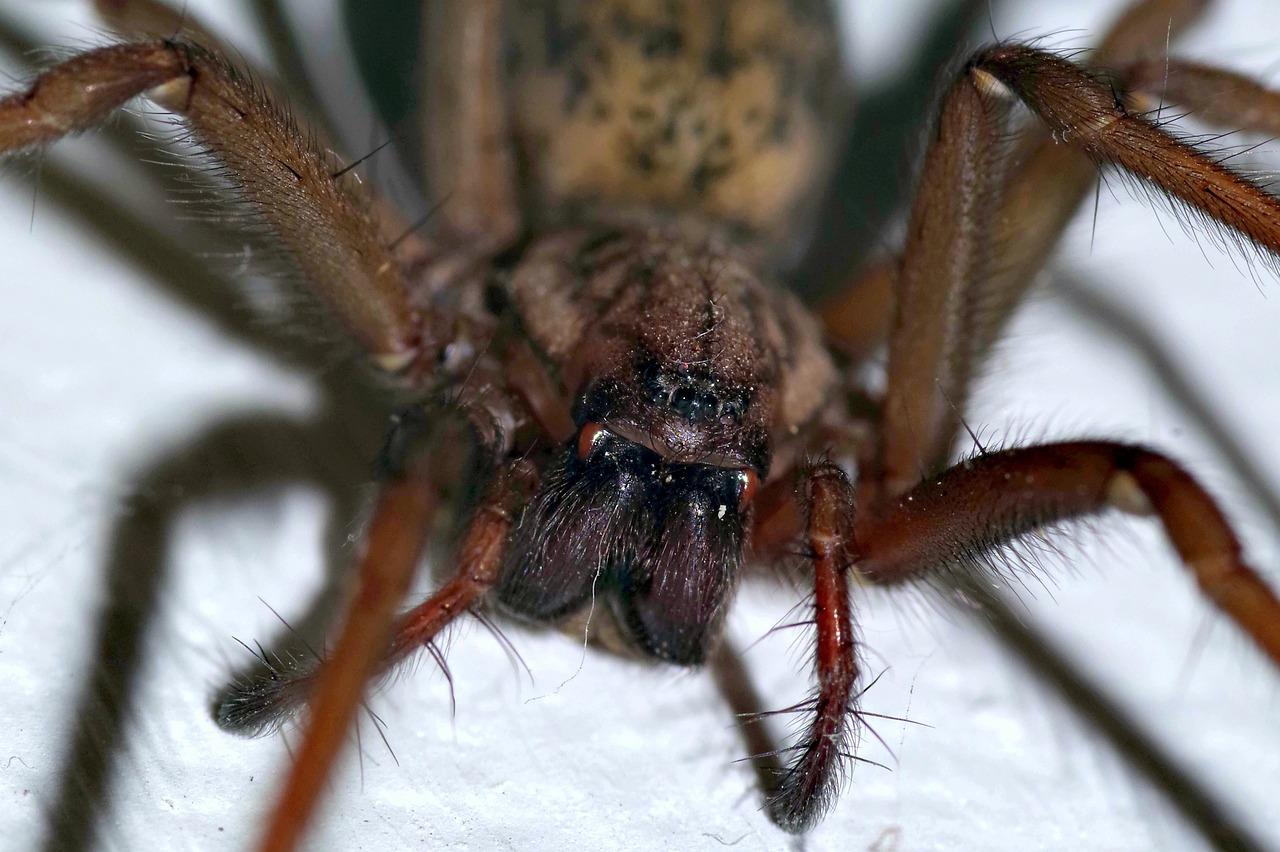Картинки страшного паука