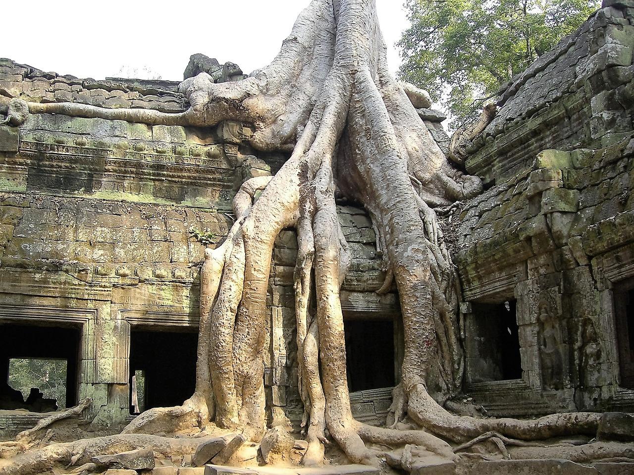 破滅, 古い, ツリー, アンコールワット, カンボジア, 下落, 歴史