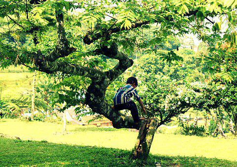 Kid, Tree, Play, Climbing, Outside