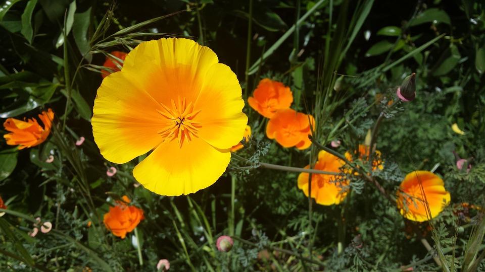 Yellow orange flower free photo on pixabay yellow orange flower petal nature bright color mightylinksfo