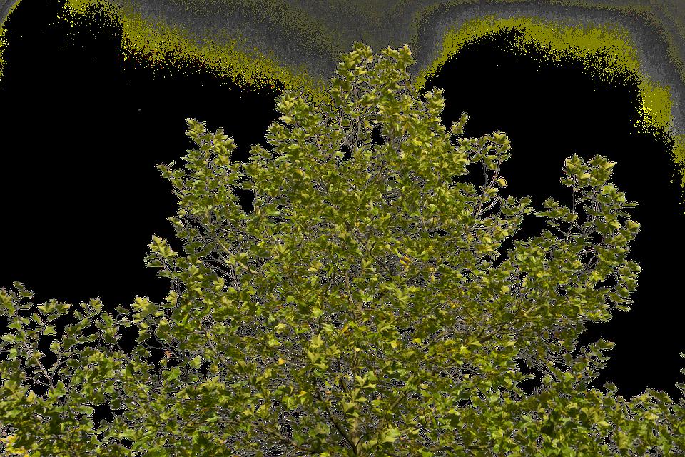 Árbol Ramas Verde · Foto Gratis En Pixabay