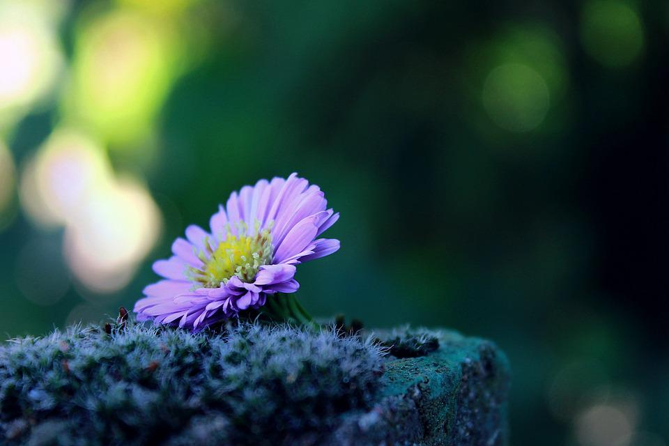 Kết quả hình ảnh cho ảnh hoa cô đơn