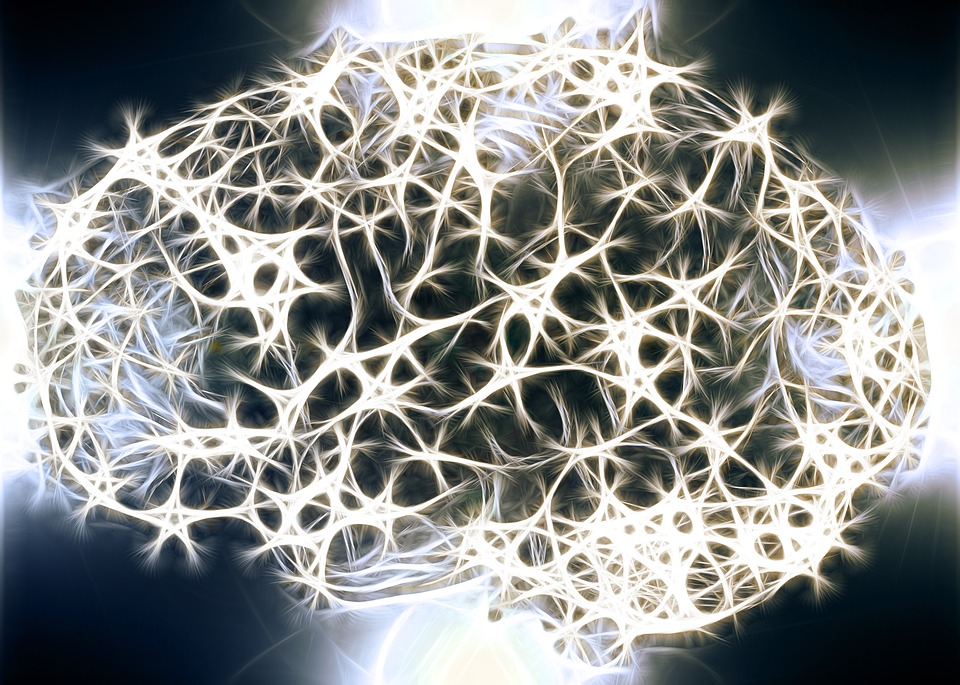 Neuronas, Células Del Cerebro, Estructura Del Cerebro